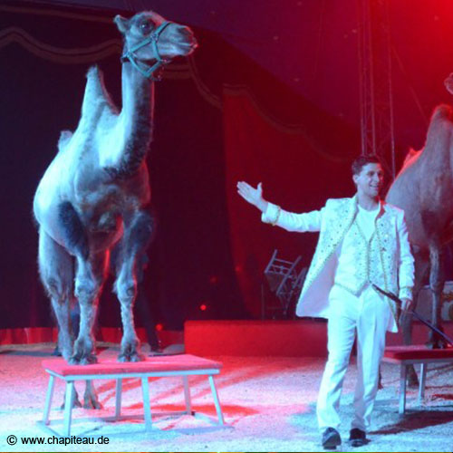 https://www.circus-rudolf-renz.de/wp-content/uploads/2019/07/17.jpg